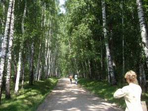 The Road to Tolstoy's Estate